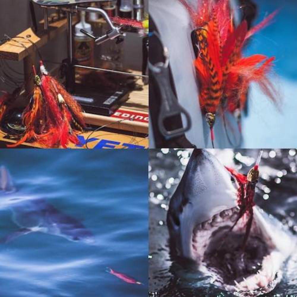 Fingerbling Shark Catch