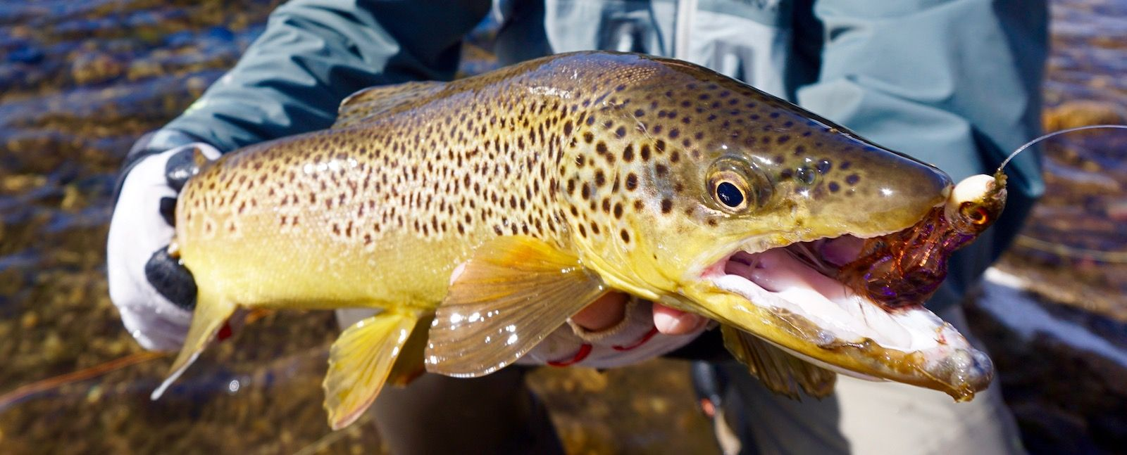 Brown Trout Catch