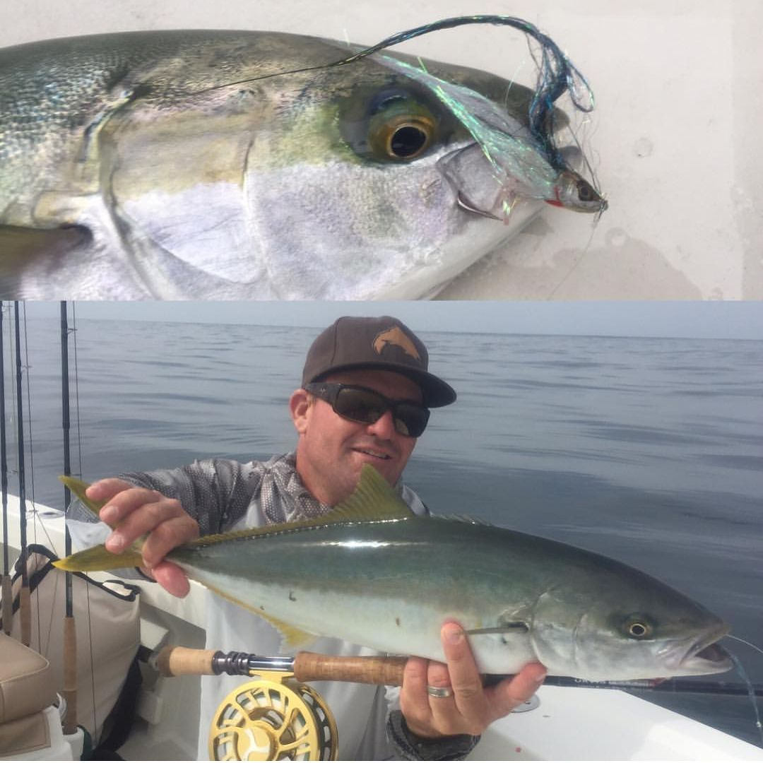 Yellow Tail Tuna